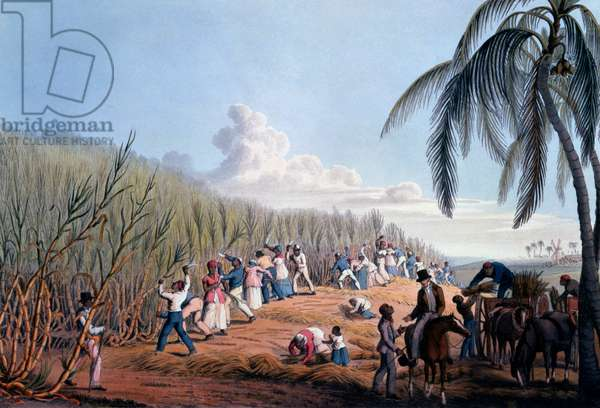 Slaves cutting the cane, from 'Ten Views in the Island of Antigua', 1823 (hand-coloured litho)