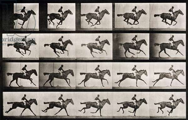 Jockey on a galloping horse, plate 627 from 'Animal Locomotion', 1887 (b/w photo)