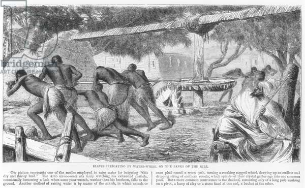 Slaves Irrigating by Water-Wheel on the Banks of the Nile (engraving) (b/w photo)