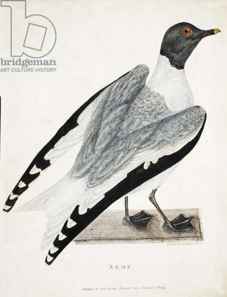 Xeme, illustration from 'A Voyage of discovery...', 1819 (hand-coloured engraving)
