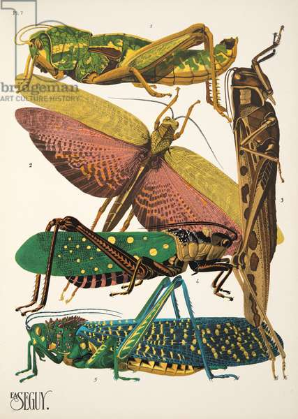 Plate 7 from Insectes, pub. 1930's (pochoir print)