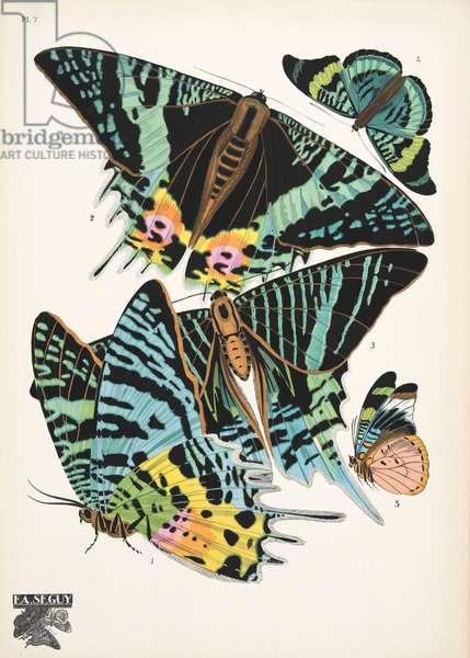 Plate 7, from Papillons, pub. 1925 (pochoir print)
