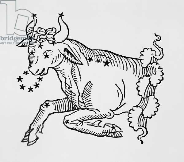 Taurus (the Bull) an illustration from the 'Poeticon Astronomicon' by C.J. Hyginus, Venice, 1485 (woodcut)