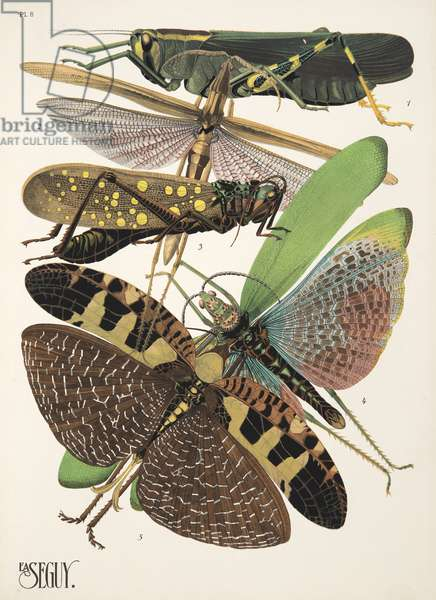 Plate 8 from Insectes, pub. 1930's (pochoir print)