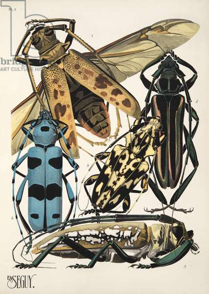 Plate 3 from Insectes, pub. 1930's (pochoir print)