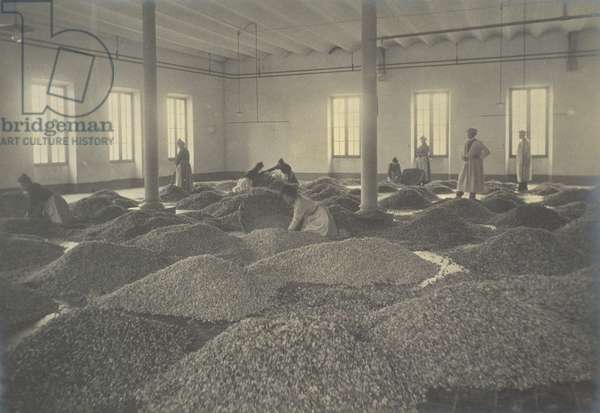 Arrival of 3000 kilograms of violets, from 'Industrie des Parfums a Grasse', c.1900 (photo)