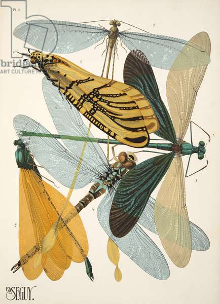 Plate 9 from Insectes, pub. 1930's (pochoir print)