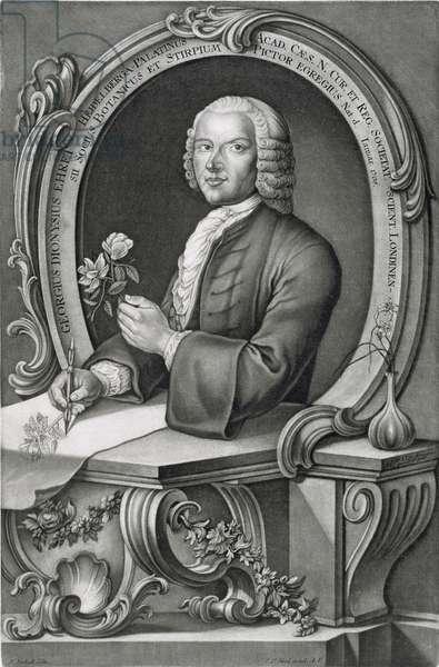 Portrait of Georg Dionysius Ehret (1710-70) engraved by Johann Jakob Haid (1704-67) (engraving)