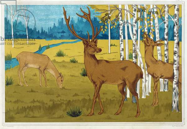 Deer, from 'L'Animal dans la Decoration' by Maurice Pillard Verneuil, pub. 1897 (colour lithograph)