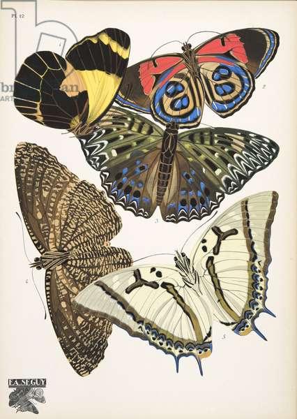 Plate 12, from Papillons, pub. 1925 (pochoir print)