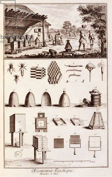 Beekeeping, from 'Dictionary of Sciences', c.1770 (engraving) (see also 746839)