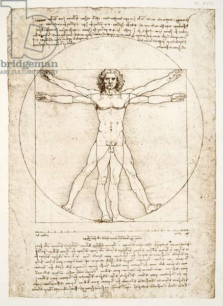 The Proportions of the human figure (after Vitruvius), c.1492 (facsimile)
