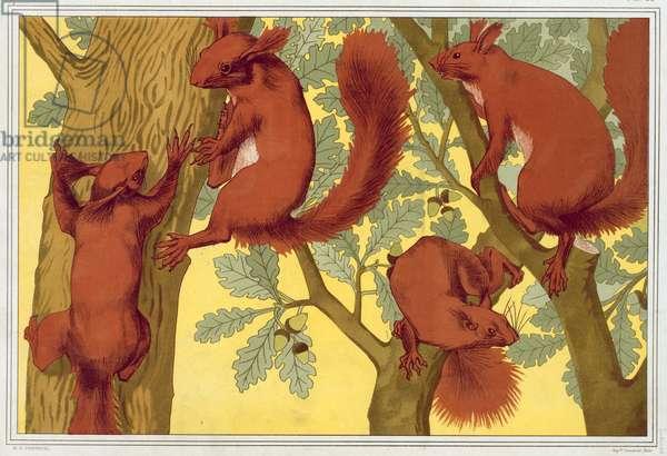 Squirrels, from 'L'Animal dans la Decoration' by Maurice Pillard Verneuil, pub. 1897 (colour lithograph)