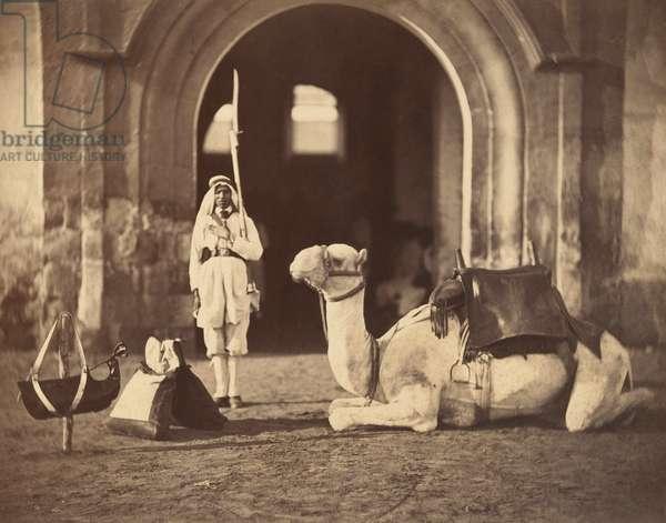Camel lying down, c.1866 (photogravure)