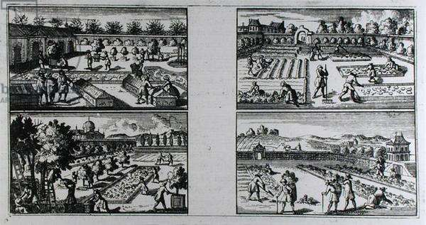 Tending a garden, from 'The Compleat Gard'ner: or Directions for Cultivating and Right Order of Fruit Gardens and Kitchen Gardens' by Jean de La Quintinye, published c.1704 (engraving) (b/w photo)