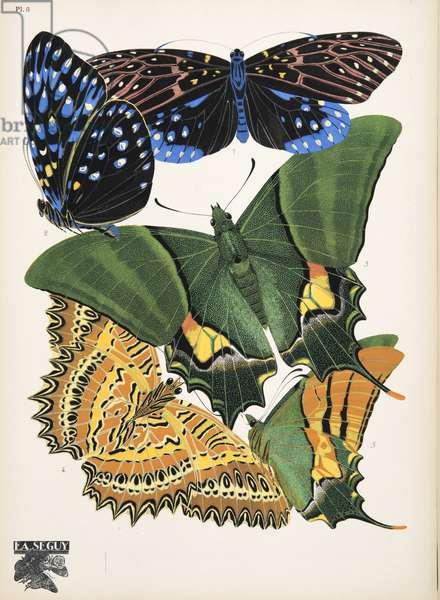 Plate 6, from Papillons, pub. 1925 (pochoir print)