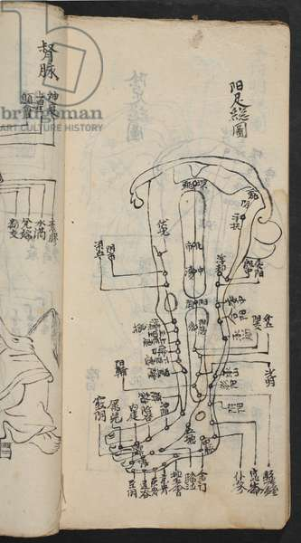 Acupuncture points on the leg, from Jing Guan Qi Zhi, 'The beginnings and ends of acupuncture points and channels', pub. Southern China, early 18th century (ink on paper)