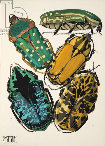 Plate 12 from Insectes, pub. 1930's (pochoir print)