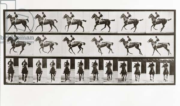 Horse and Rider, Plate 621 from Animal Locomotion, 1887 (b/w photo)