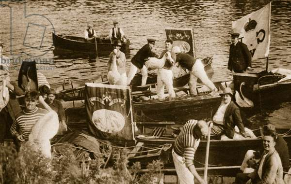 Swan upping on the Thames (sepia photo)