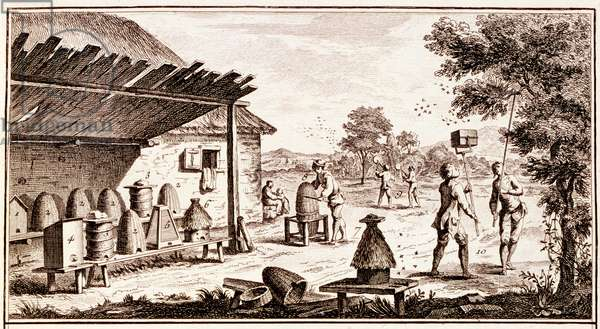 Beekeeping, from 'Dictionary of Sciences', c.1770 (engraving) (detail of 746836)