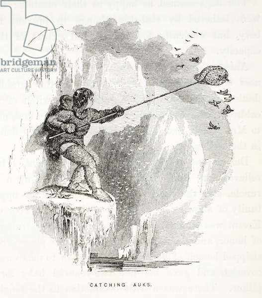 Catching Auks, illustration from, The second Grinnell Expedition in Search of Sir John Franklin...', 1856 (engraving)