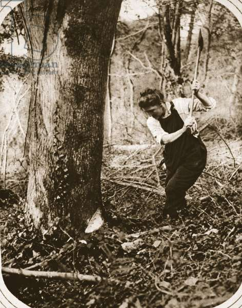 A strenuous woman-worker at Weston-Super-Mare; felling trees in a Somerset wood, illustration from 'The Illustrated War News', September 1916 (sepia photo)