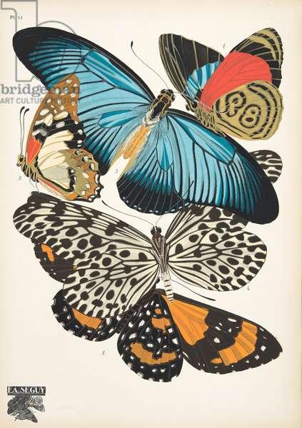 Plate 11, from Papillons, pub. 1925 (pochoir print)