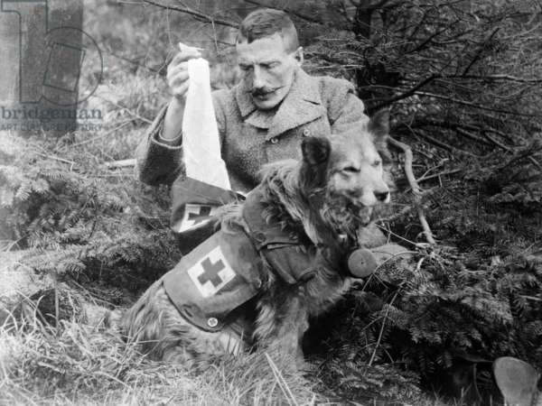 Red Cross Dog, c.1914-18 (b/w photo)