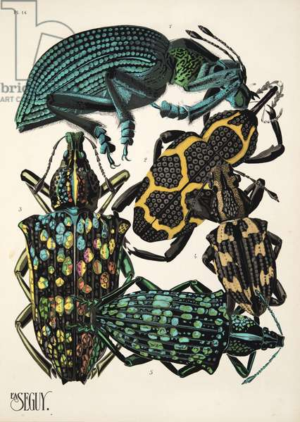Plate 14 from Insectes, pub. 1930's (pochoir print)