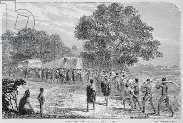Bringing Ivory to the Wagons in South Africa (engraving) (b/w photo)
