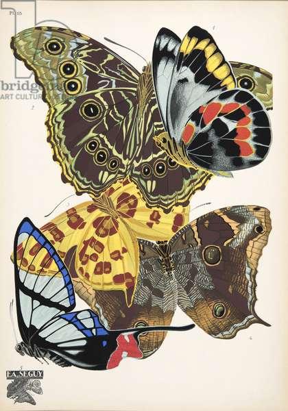 Plate 15, from Papillons, pub. 1925 (pochoir print)