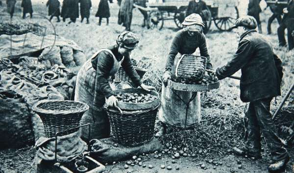 Women War-workers on the land, illustration from 'The Illustrated War News', 7th March 1917 (sepia photo)
