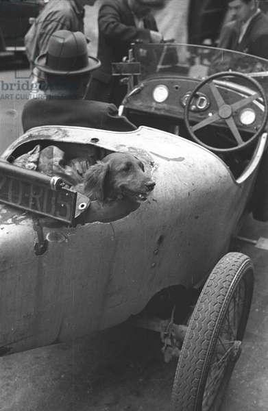 Dog, Paris 1938