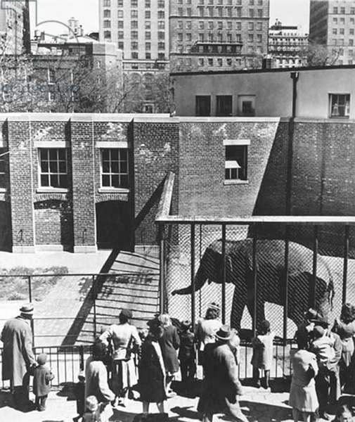 Zoo, New York 1942