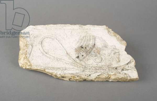 Head of a Prisoner, 1391–1307 BC, New Kingdom (limestone)