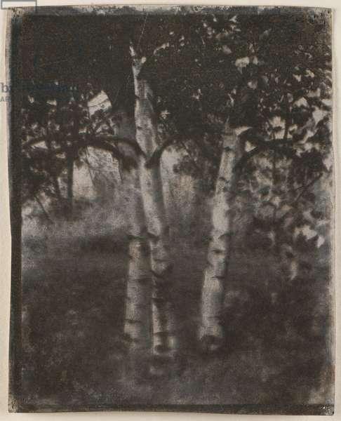 Landscape with Trees, c.1905 (multiple gum bichromate on w/c paper)