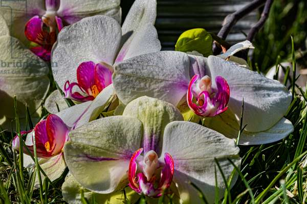Orchids in spring, close-up on blurred background, 2020 (photo)