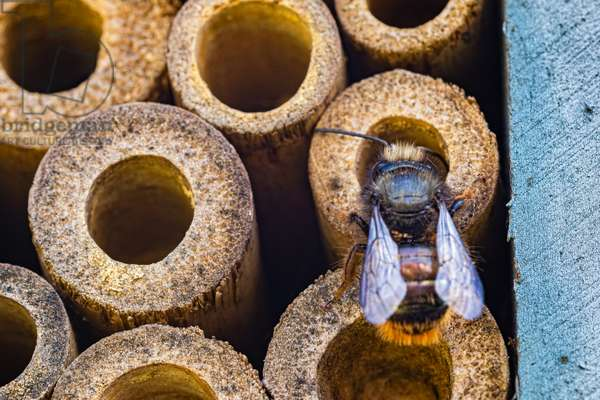 Bee will confine, Dijon, France, March 2020 (photo)