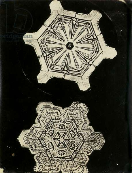 Snowcrystals, c.1903-10 (gold-chloride toned photomicrograph)