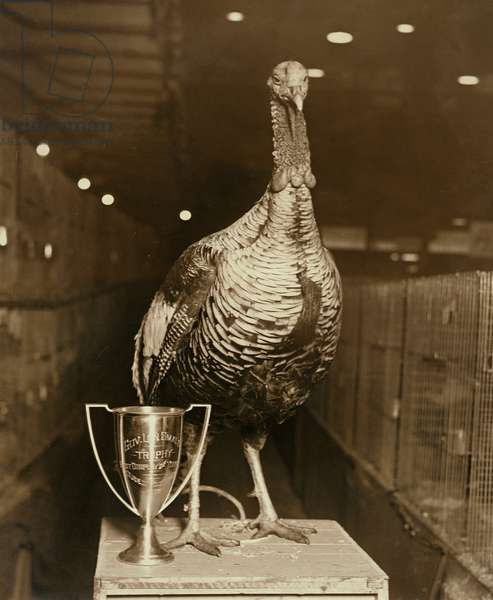 The Grand Champion Gobbler of the World (b/w photo)