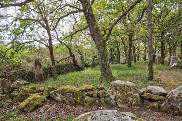 The Kerzerho alignments - Les Geants de Kerzerho - Alignements de Kerzerho - Menhirs et Dolmens - Brittany - Morbihan - France -