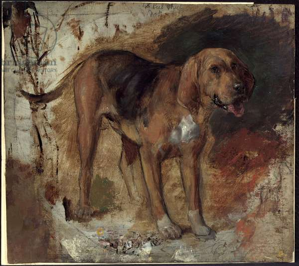 Study of a Bloodhound, 1848 (oil over pencil on board)