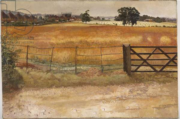 Wheatfield at Starlings, 1947 (oil on canvas)