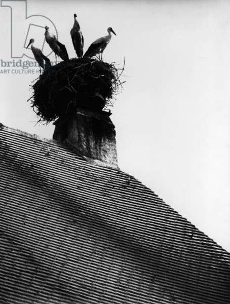 Storks on a chimney in Zusmarshausen (b/w photo)