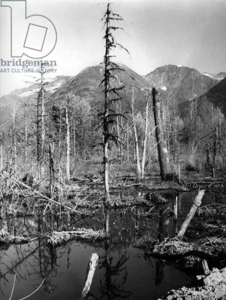 Landscape in Alaska (b/w photo)