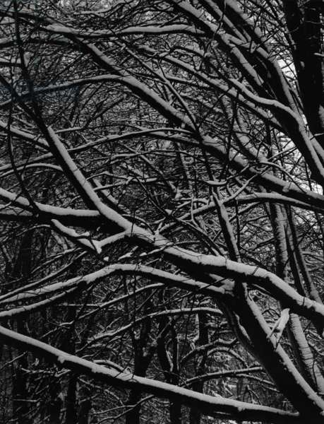 Snowy trees (b/w photo)