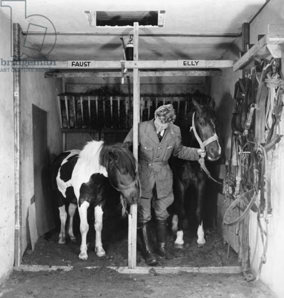 Coach horses in Amsterdam during the Second World War (b/w photo)