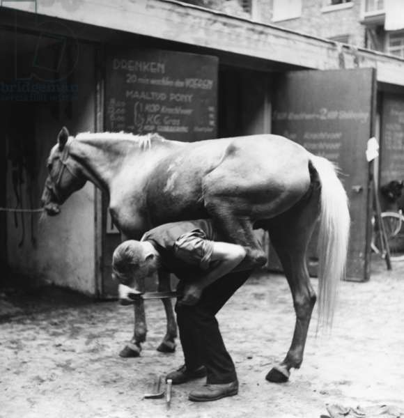 Coach horse in Amsterdam during the Second World War (b/w photo)