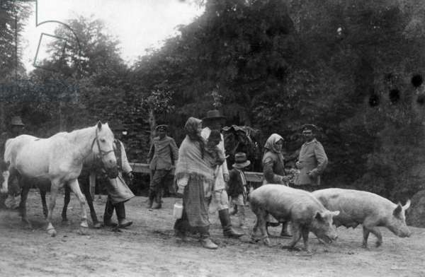 Ruthenian refugees and their livestock return to their home in Galicia, Ukraine, 1915 (b/w photo)